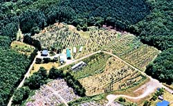 空から見た南果樹園(2)